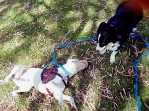 Dog Training reactive dog